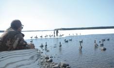 Spring Goose Hunt