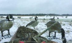 Goose Break allows Cree hunters reconnect with the past