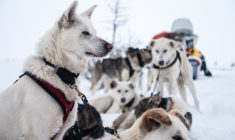 The Home Run: mushing through history and tough weather