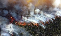 Mines and communities work together to fight forest fires during hot and dry July