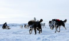 Nunavik's Ivakkak dogsled race is helping renew Inuit traditions